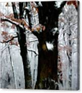 Winter Tree Right Canvas Print