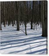 Winter Trees In Snow With Shadow Lines Canvas Print