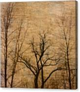 Winter Trees In The Bottomlands 2 Canvas Print