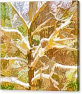Winter Trees On Snow 2 Canvas Print