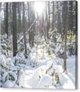 Winter Under The Sun Canvas Print