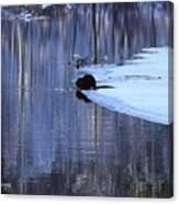 Winter Wildlife In New England Canvas Print