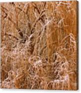 Winter Willow Branches Canvas Print