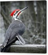 Winter Woodpecker Canvas Print