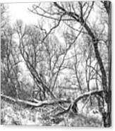 Winter Woods On A Stormy Day 2 Bw Canvas Print