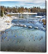 Wintering Geese Canvas Print