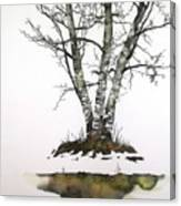 Winters Birch Canvas Print