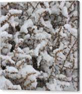 Winter's Contrast Canvas Print