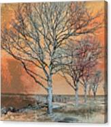 Winter's Dawn Canvas Print