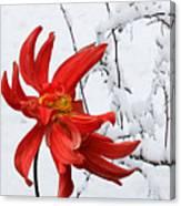Winter's Dream A Canvas Print