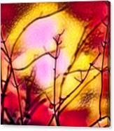 Winter's Glow Canvas Print