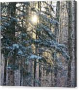 Winter's Midday Light Canvas Print