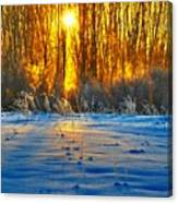 Winters Morning Canvas Print