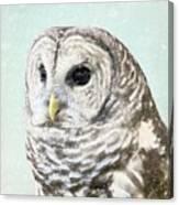 Winters Owl, Barred Hoot Owl Winter Snow Falling Canvas Print