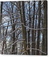 Winter's Touch Canvas Print