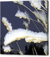 Wintry Wild Oats Canvas Print