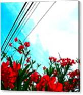 Wire Flowers Canvas Print