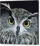 Wise Eyes II Canvas Print