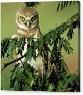 Wise Watcher Canvas Print