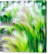 Wispy Green Canvas Print
