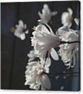 Wipsy Mini Magnolias Canvas Print