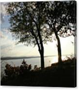 Wister Trees Canvas Print