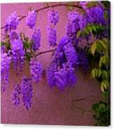 Wisteria At Sunset Canvas Print