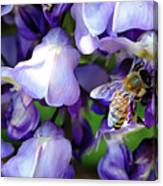 Wisteria Bee Canvas Print
