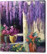 Wisteria Blooms Canvas Print