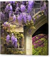 Wisteria Blossom Canvas Print