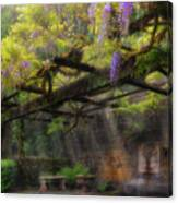 Wisteria Flowers Blooming On Trellis Over Water Fountain Canvas Print