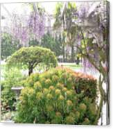 Wisteria In Hailstorm Canvas Print