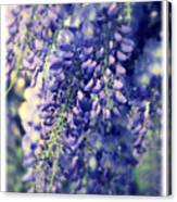 Wisteria Whimsy Canvas Print