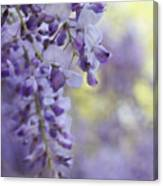 Wisteria's Soft Floral Whispers Canvas Print