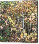 Witch Hazel Forest Canvas Print