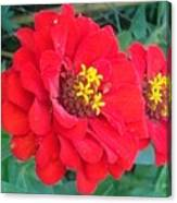 With Beauty As A Pure Red Rose Canvas Print