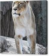 With Majesty Canvas Print
