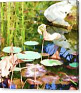 Withered Lotus In The Pond 2 Canvas Print