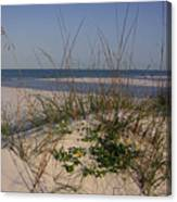 Withering Dunes Canvas Print