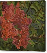 Wo-ganvillia Canvas Print