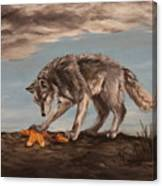 Wolf And Sea Star Canvas Print