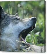 Wolf Bugged Canvas Print