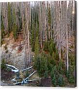 Wolf Creek Pass Forest Landscape Canvas Print