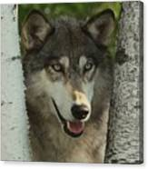 Wolf In The Birch Trees Canvas Print