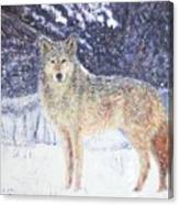 Wolf Of The North Canvas Print