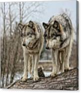 Wolf Pair Canvas Print