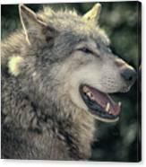 Wolf Rock Canvas Print