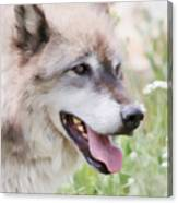Wolf Smile Canvas Print