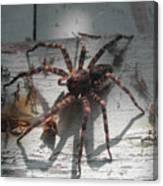 Wolf Spider Sunlight Canvas Print