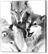 Wolf Triplets Canvas Print